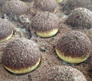 arap-kurabiyesi