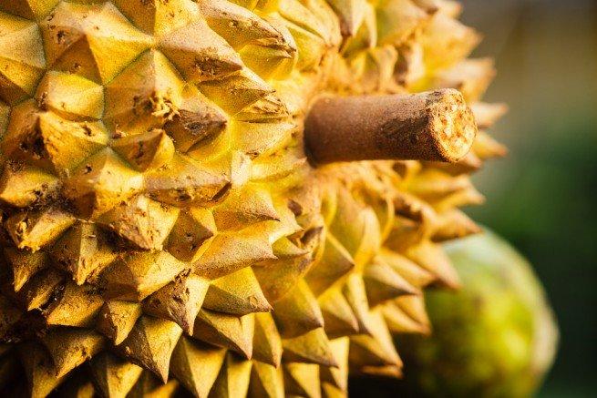 durian yetirtiği yerler, durian nerede üretilir