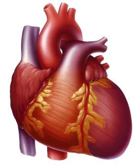 kalp-agrisi-nedenleri