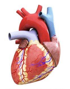 kalp-yetmezligi-hastaligi